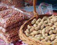 تولید بادام زمینی