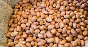 فروشگاه بذر بادام زمینی
