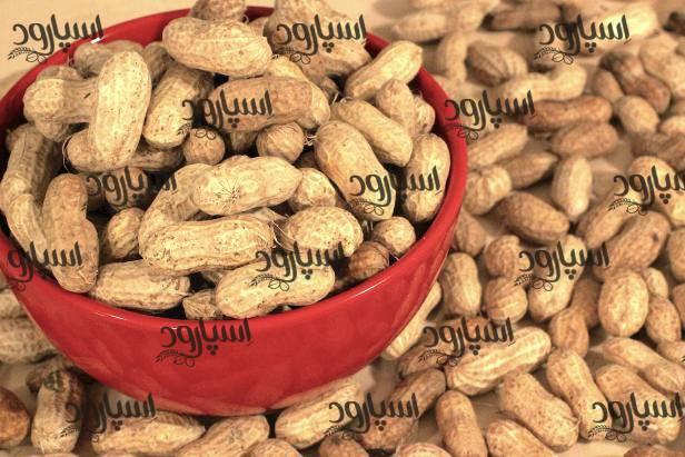 خرید عمده بادام زمینی