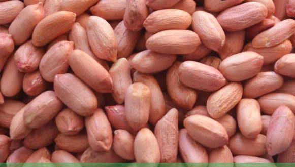 فروش بادام زمینی درجه یک به صورت عمده